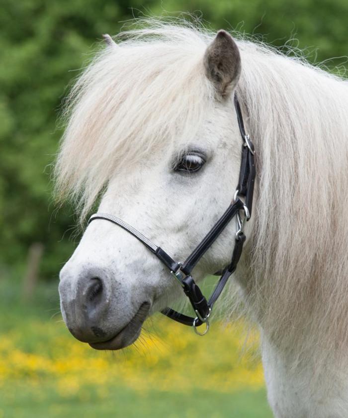 glitzerlederhalfter-pony