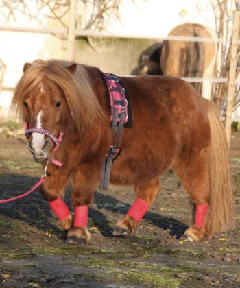unicorn-longiergurt-shetty
