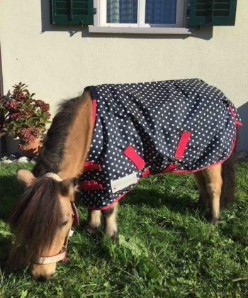 Regendecke Unicorn Gras
