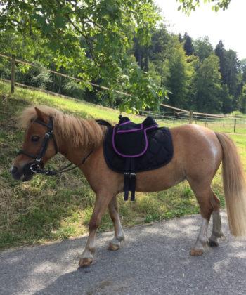 floeckli-mit-sattel-unicorn