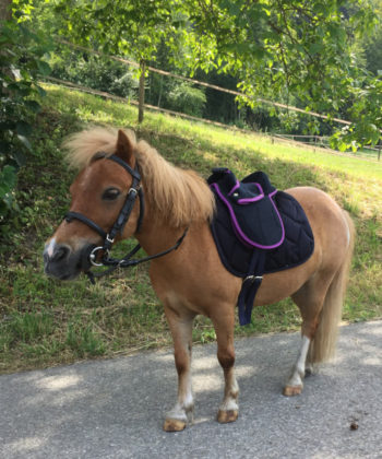 unicorn-sattel-mit-flocke