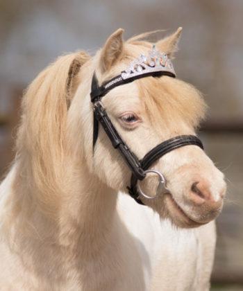 silberkrone-pony