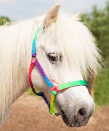 regenbogen-pony