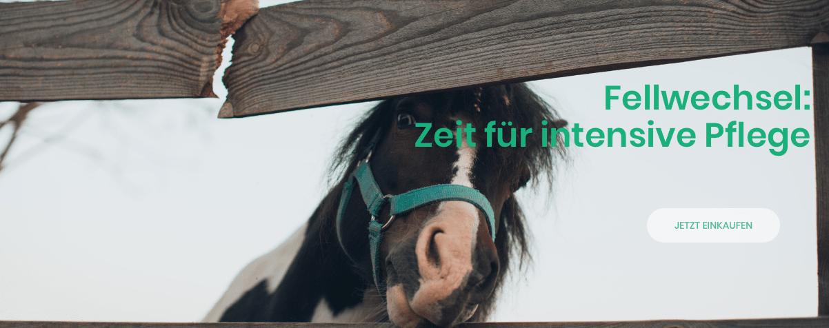 fellwechsel-shetty-pony